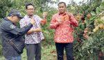 Berawal Sebidang Tanah, Kini 300 Hektar Lahan di Pangkahwetan Jadi Kebun Buah