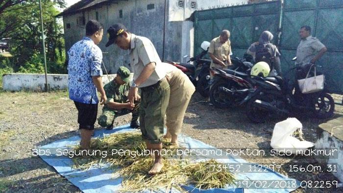 Babinsa Desa Segunung bersama kordinator penyuluh pertanian lakukan pengubinan