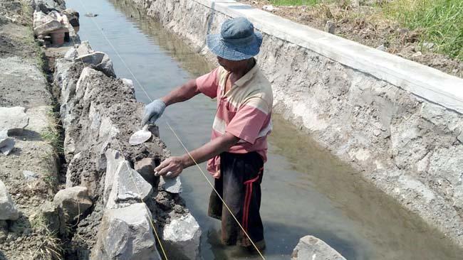 Perbaiki Saluran, Panen Petani Terung Kulon Melimpah