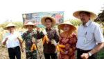Produksi Jagung Melimpah, Kabupaten Kediri Persiapan Ekspor