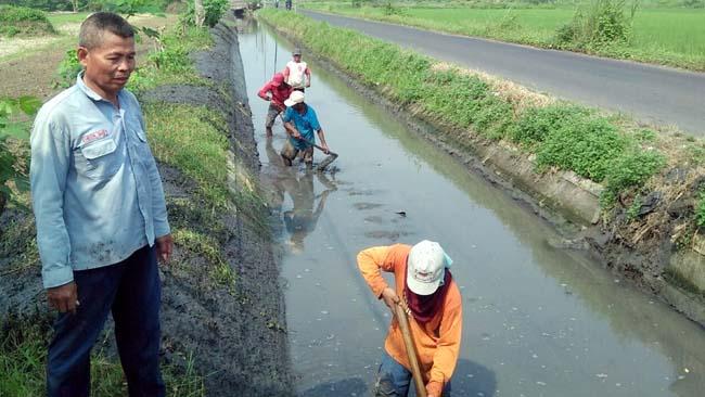 Para petani Desa Wonokasian menormalisasi anak Avfur Pucang (par)