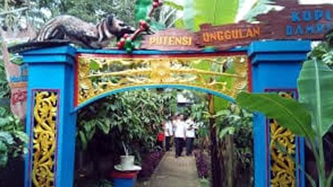 Kawasan Ekawisata Kopi Amadanom. (Sur)