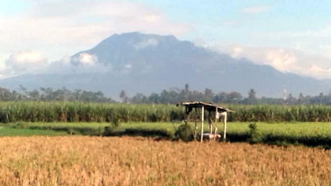 Sebagian kekeringan sawah Desa Sukoharjo. (Sur)