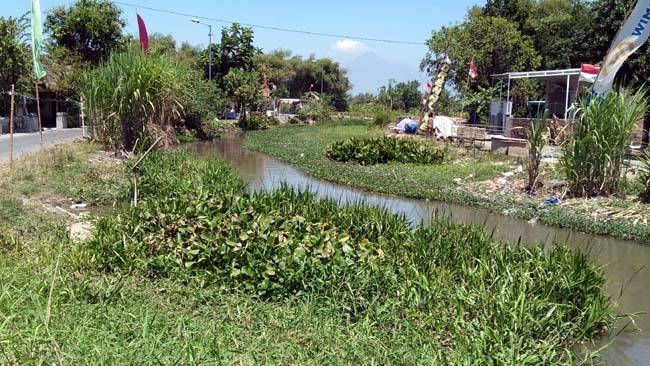 Sungai Puboyo penuh sedimen dan tumbuhan air sehingga terjadi pendangkalan. (par)